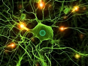 future-scientists-successfully-use-urine-to-create-brain-cells-futuristic-1