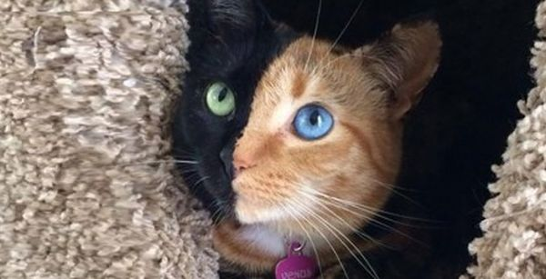The two-faced cat 2