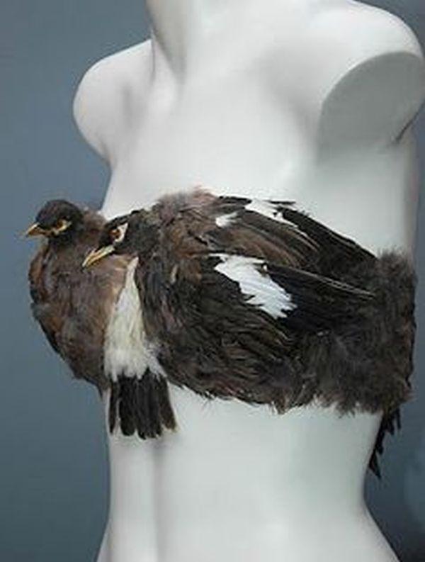 The bird bra
