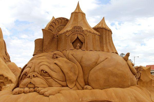 The cutest sand dog