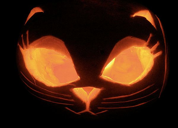 Puss in the pumpkin