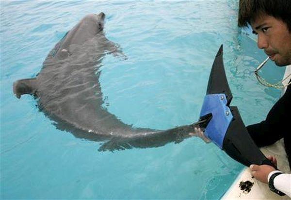 Fuji the Dolphin