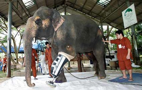 Motala the Elephant