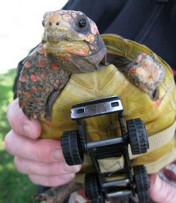Tonka the Turtle Wheels