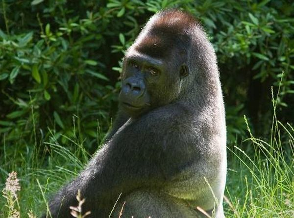 protected by gorilla (2)