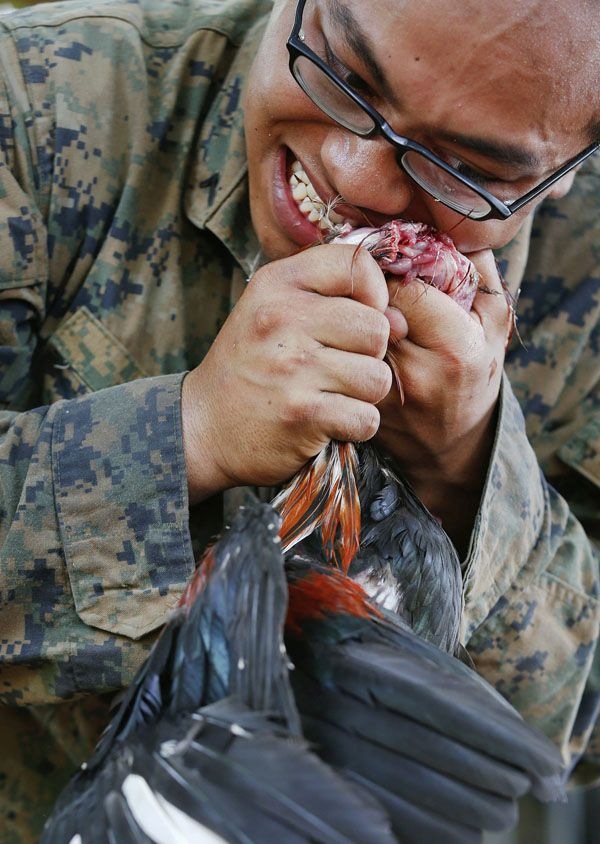 "A U.S. Marine kills a chicken with his teeth during a jungle survival exercise with the Thai Navy as part of the ""Cobra Gold 2013"" joint military exercise, at a military base in Chon Buri province February 20, 2013. About 13,000 soldiers from seven countries, Thailand, U.S., Singapore, Indonesia, Japan, South Korea and Malaysia are participating in the 11-day military exercise. REUTERS/Damir Sagolj (THAILAND - Tags: POLITICS MILITARY SOCIETY)"