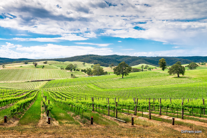 The-Delightful-Wine-Region-of-Adelaide-Hills.